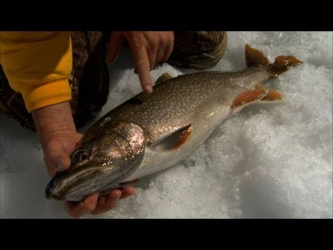 Frozen Mogan - LAKE TROUT fishing in Colorado