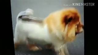 New 2018 funny dogs fun play