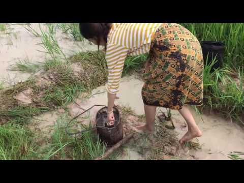 Woow...!! Gadis Cantik ini Mencari ikan di sawah
