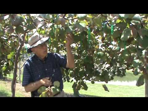 Dr. Arlie Powell – Golden Kiwi