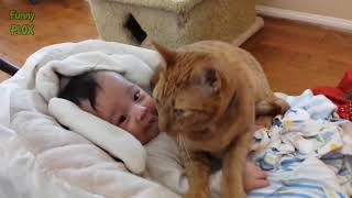 Cats Protecting Babies Videos Compilation 2017 - Cat Loves Babies