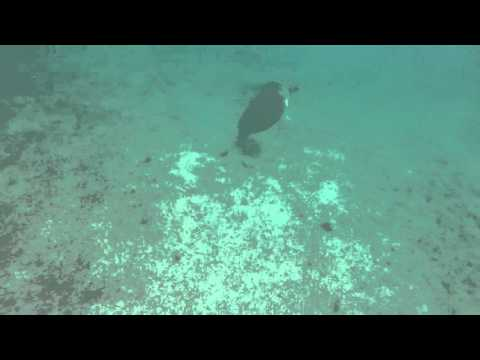 Snorkeling in Cancun, Mexico - Secrets Akumal Rivera Maya
