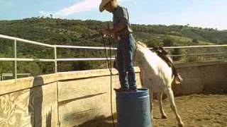 Rehabing bucking horse part two David Lee Archer