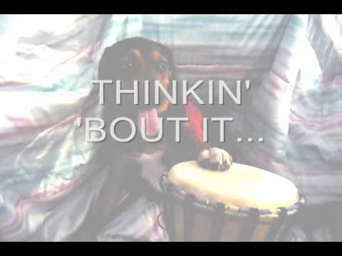 Drum time doggies show coming soon drumtimecanada com drumtimemiami