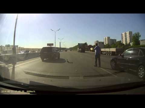 高速道路に迷い込んだカモ...