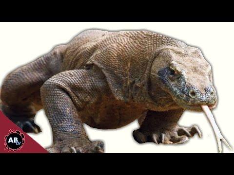 In Search Of Komodo Dragon! CoreyWild