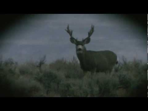 Wyoming Mule Deer Hunt - Heather Farrar - MossBack