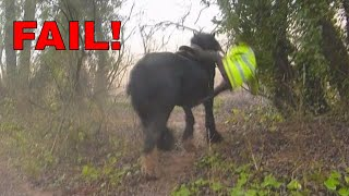 *Splat* FAIL!!! Funny Horse Fall -  Fell off trying to jump a stream lol
