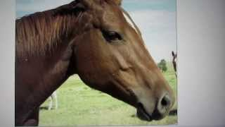 Sculpting With Lemon - Instructional Video on Sculpting a Horse
