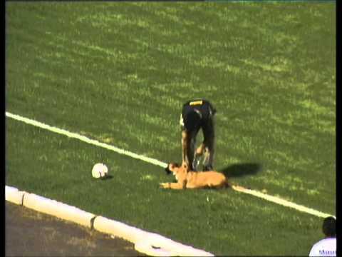 Perros - Perro entra en partido de futbol y roba la pelota