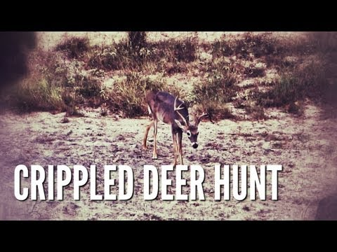 Crippled Deer | Hunting for Herd Management with a Crossbow