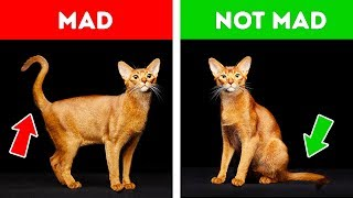 If Your Cat Acts Strangely, Don't Worry. Here's the Explanation!