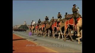 Camel mounted Indian Army brass band at Republic Day Parade in New Delhi