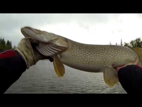 рыбалка на джеркбейты крупной щуки