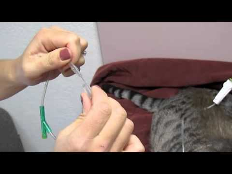 How to give subcutaneous (subQ) fluids to a dog or cat.