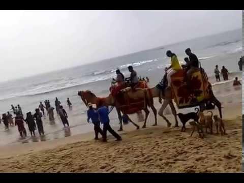Exciting camel-riding at Puri  sea beach, Odisha