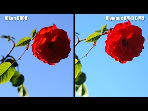 NIKON D800 vs OLYMPUS OM-D E-M5 - SHOOTOUT VIDEO