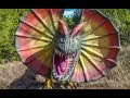 Dinosaur Valley State Park Dinosaur World Glen Rose Texas TX