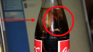 Mira que encontraron en Coca cola!! VIDEO CENSURADO