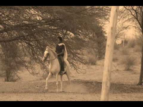 The best Marwari horse. Must watch!!!