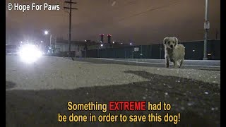 Something EXTREME had to be done in order to save this homeless dog.  DON
