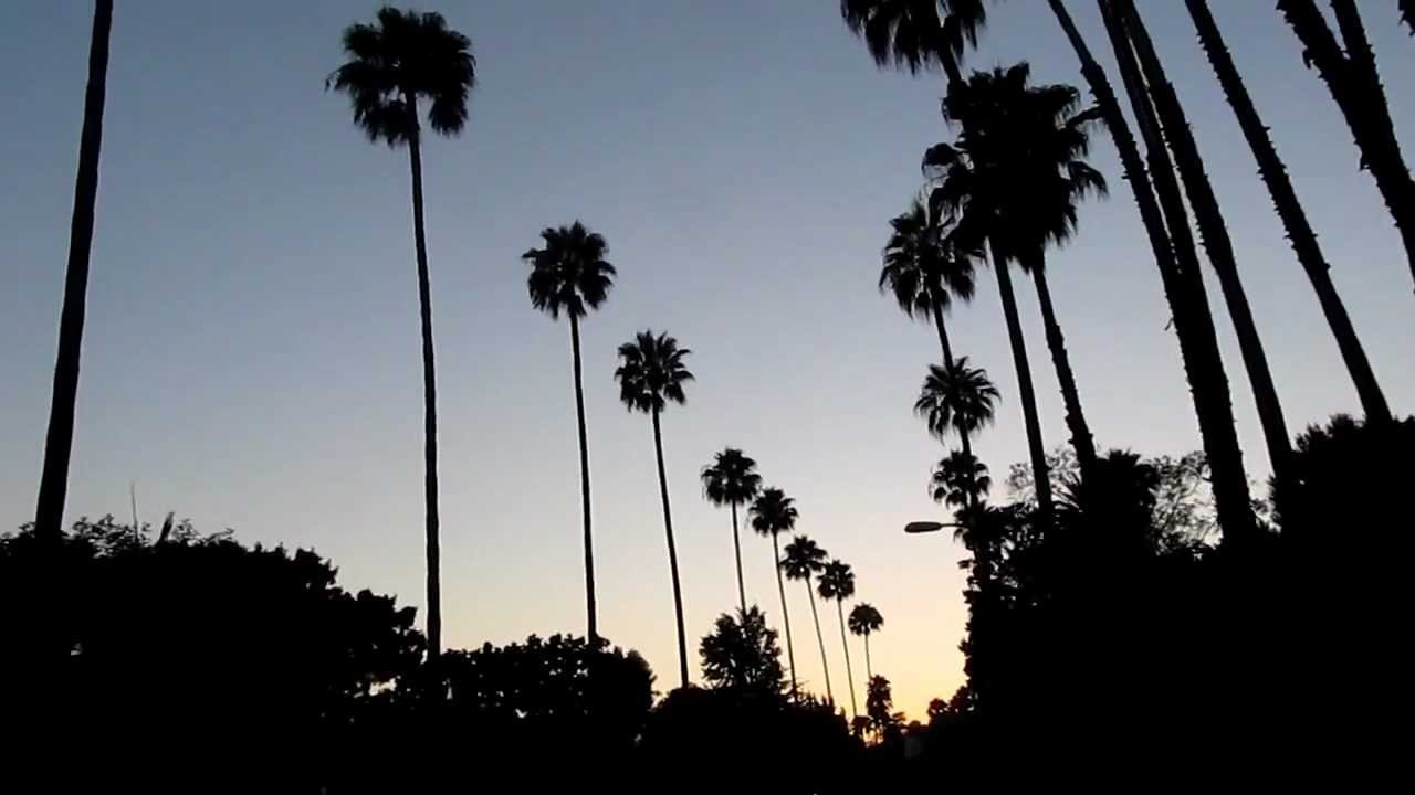 Palm Trees Hollywood Palm Trees in Hollywood