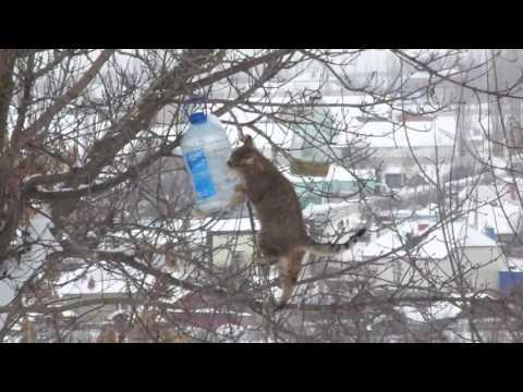 Воронежский кот-экстремал ворует сало из кормушек