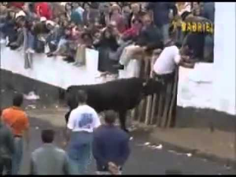 Funny Bull Fighter 2014