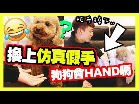 【整蠱】主人把手換成「淘寶仿真假手✋」,狗狗會被騙嗎?