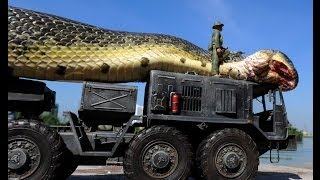 Cooking | Cobra gigante encontrada no Mar Vermelho | Cobra gigante encontrada no Mar Vermelho