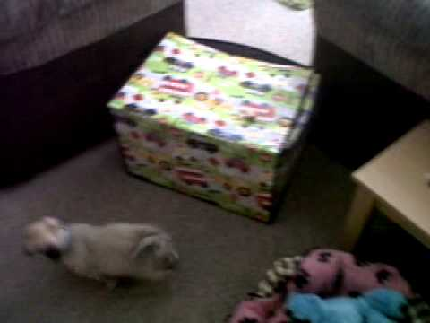 No-one Wants To Play With Poor Gizmo Xxx video