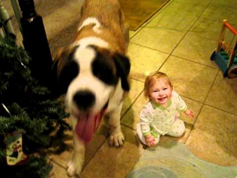 Baby 14 Months Old Playing With Saint Bernard Puppy 7