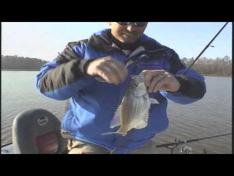 Weiss Lake Guides Service - 256-706-4000 - Weiss Lake Guide Service Long Line Trolling