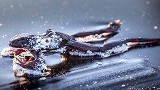 7 Animais Encontrados Congelados