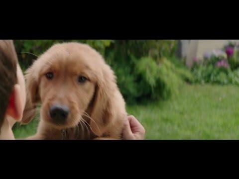 """Movie Pass: """"A Dog's Purpose"""""""