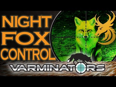 Lamping Foxes: EXTREME Night Vision Hunting - Shooting Foxes at Night