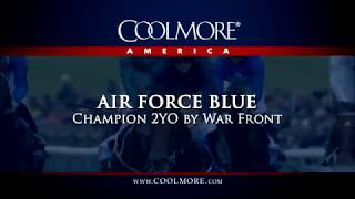 Air Force Blue - Impressive First Foals