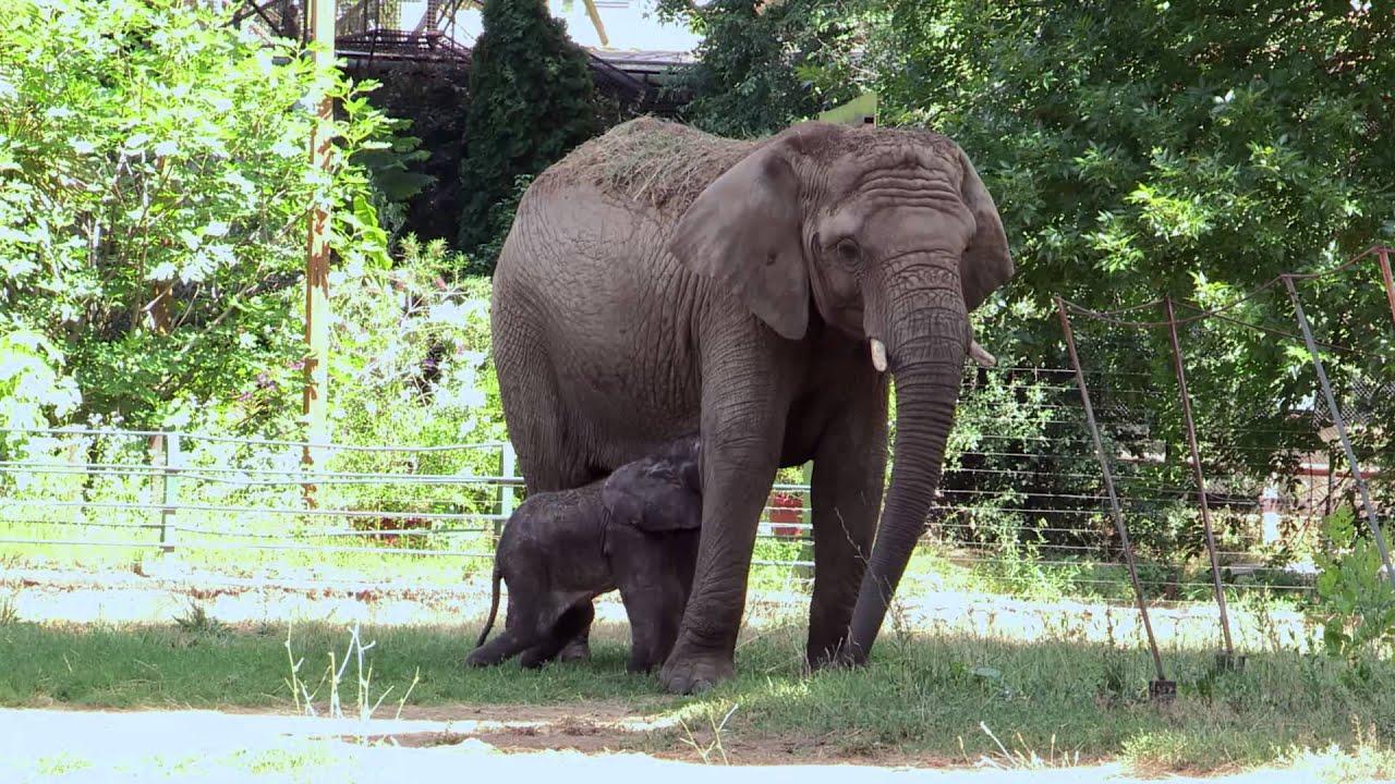 Idén 170 állat született a Nyíregyházi Állatparkban