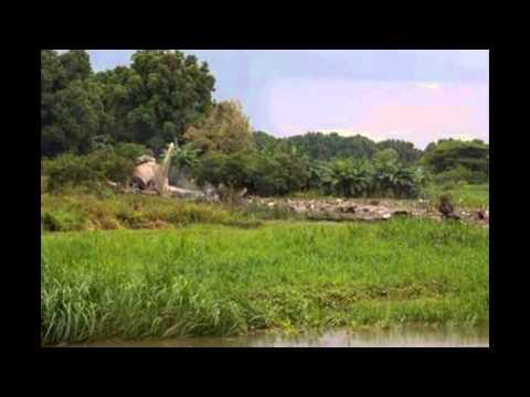 Russian-made cargo plane crash in South Sudan | updatelatestnews