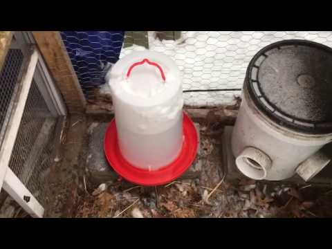 Heated 3 Gallon Chicken Waterer Review Model HPF-100