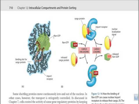 Nuclear Protein receptor