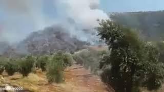 حرائق تلتهم أشجار الزيتون في عفرين سوريا Afrin Syria