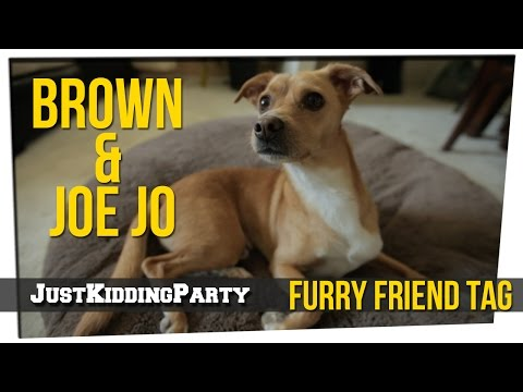 Furry Friend Tag ft Brown and Joe Jo
