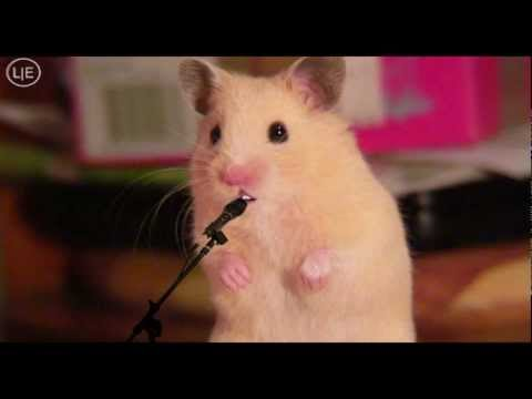 Hamster singing Mrs. EMMA the HAMSTER (3) my Song - re. DSDS KIDS 2012