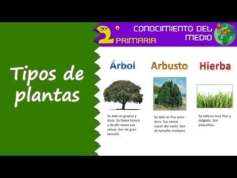 Cono 2 primaria tema 6 tipos de plantas youtube - Lista nombre arbustos ...
