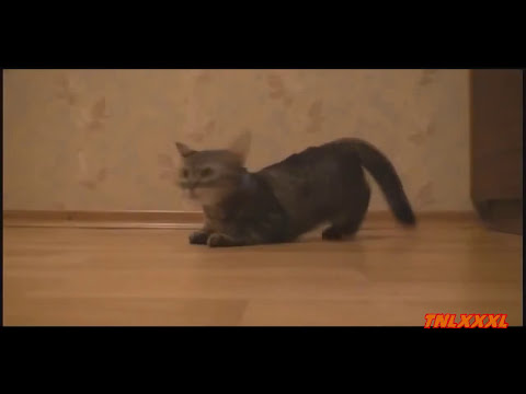 videos de risa 2013 new funny cats,funny cat videos 2013,funny animals 2013,funny video 2013,