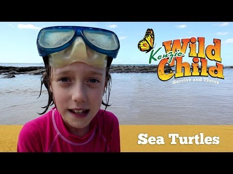 Swimming with Sea Turtles and Kenzie Wild Child