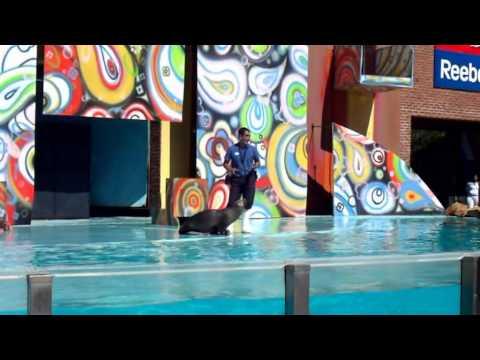 4/4 Aquarium Mar del Plata Show LOBOS MARINOS  HD Diciembre 2010 Acuariun