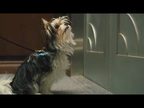 A Dog's Journey | Max Leads CJ To Trent | Film Clip | Own It Now On Digital, 8/20 On Blu-ray & DVD