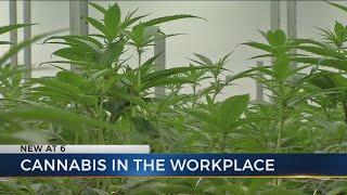 New medical marijuana laws may test workplace drug policies